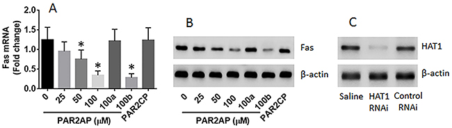 PAR2 suppresses Fas expression in lung epithelial cells.