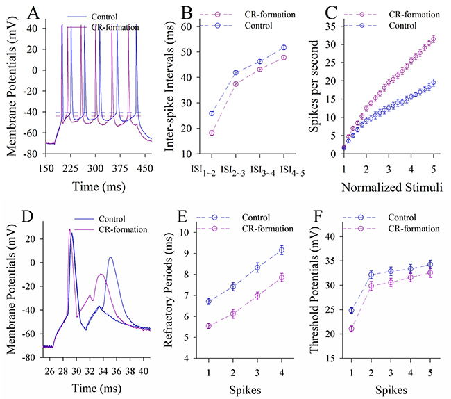 The ability to encode spikes on the pyramidal neurons of the piriform cortices increases in CR-formation mice.