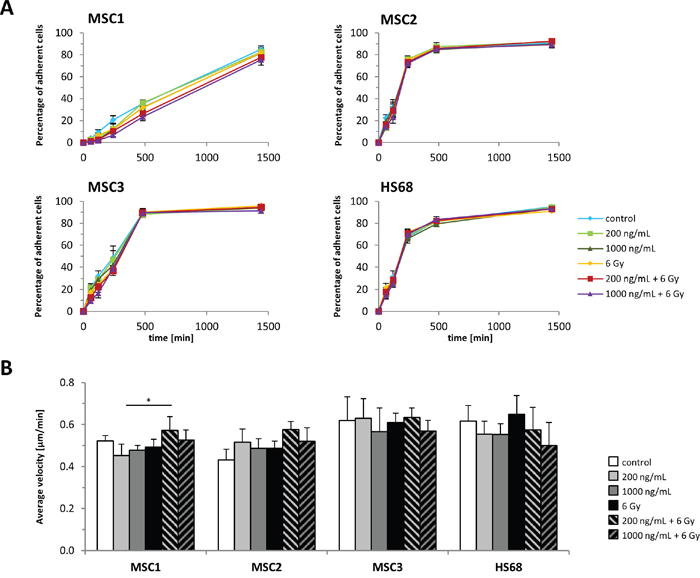 MSC adhesion and motility is unaffected by cisplatin-based chemo-radiation.