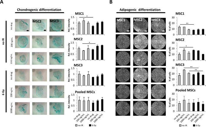 Cisplatin-based chemo-radiation does not affect the differentiation potential of MSCs.