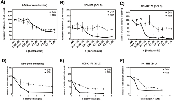Treatment with bortezomib or siomycin A suppresses SCLC cell proliferation.