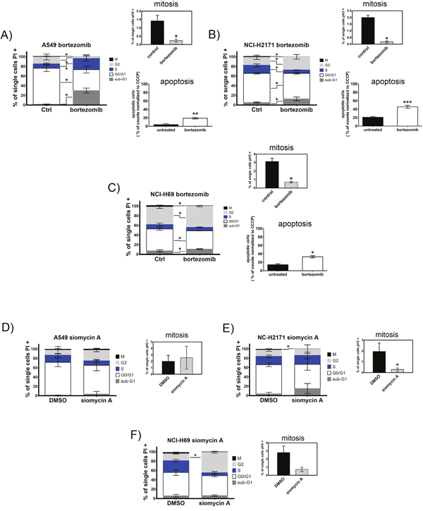Treatment with bortezomib or siomycin A induces cell cycle arrest and apoptosis of SCLC cells.