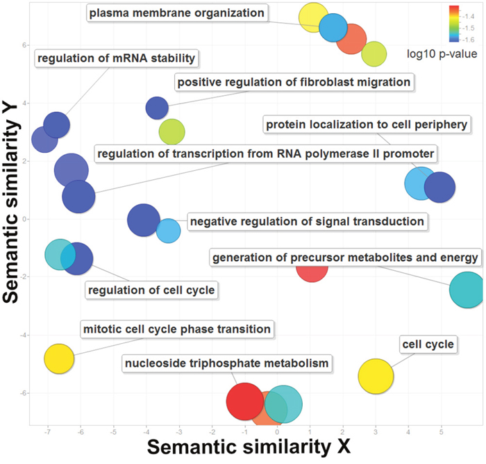 The enriched gene ontology terms for the 210 genes regulated by super-enhancers.