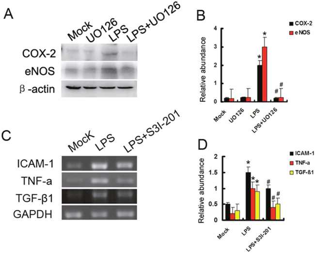 Both ERK1/2 and STAT3 play different role in LPS induced gene expression.