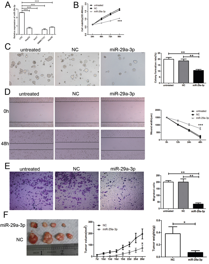 Overexpression of miR-29a-3p inhibited cancer cell growth and migration in vitro and in vivo.