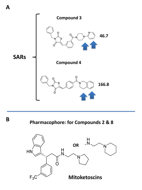 Structure activity relationships (SAR) for compounds 3 and 4.