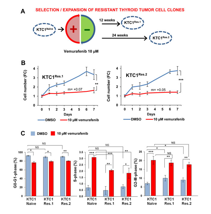 Clonal selection and expansion of PTC patient-derived cells with BRAF