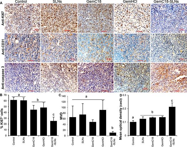 Immunohistostaining of LLC tumors from mice that were orally gavaged with GemC18-SLNs.