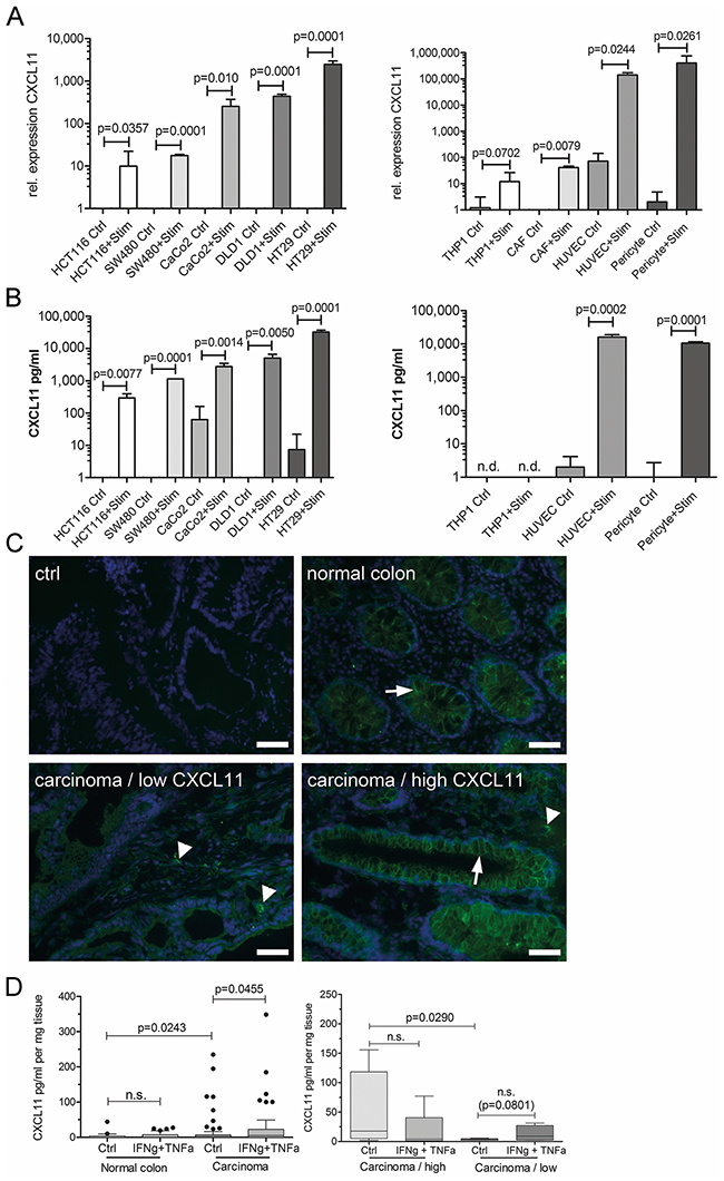 Cancer and stroma cells produce CXC-chemokines.