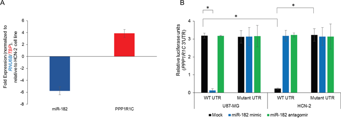 PPP1R1C is a bona-fide target of miR-182 in the glioblastoma cell line U87-MG.