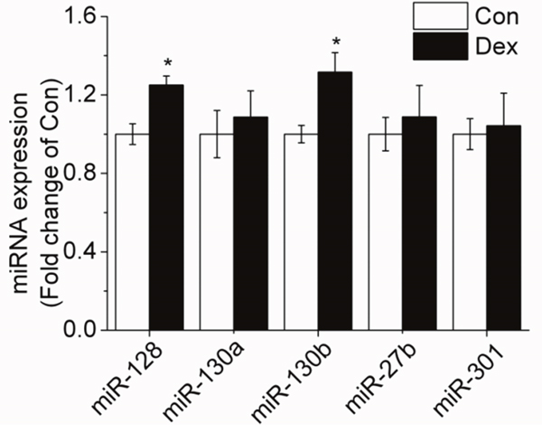 Effect of 10-6 M DEX on the expression of miRNAs targeting PPAR-γ in porcine preadipocytes.