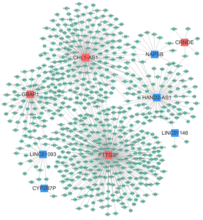 LncRNA-mRNA co-expression network.