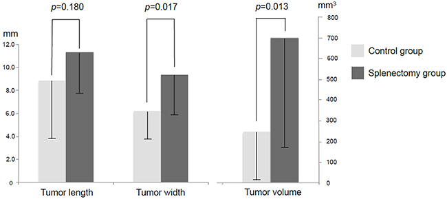 Tumor size and volume in splenectomy and control groups.