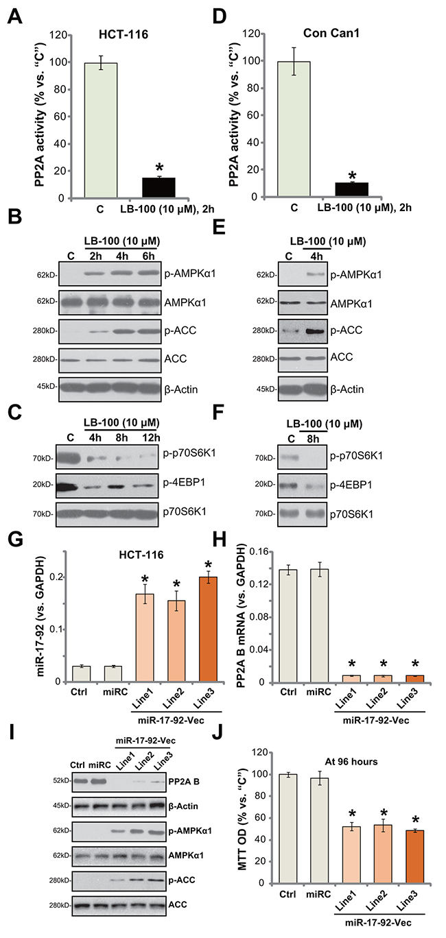LB-100/miR-17-92 inhibits PP2A and activates AMPK signaling in CRC cells.