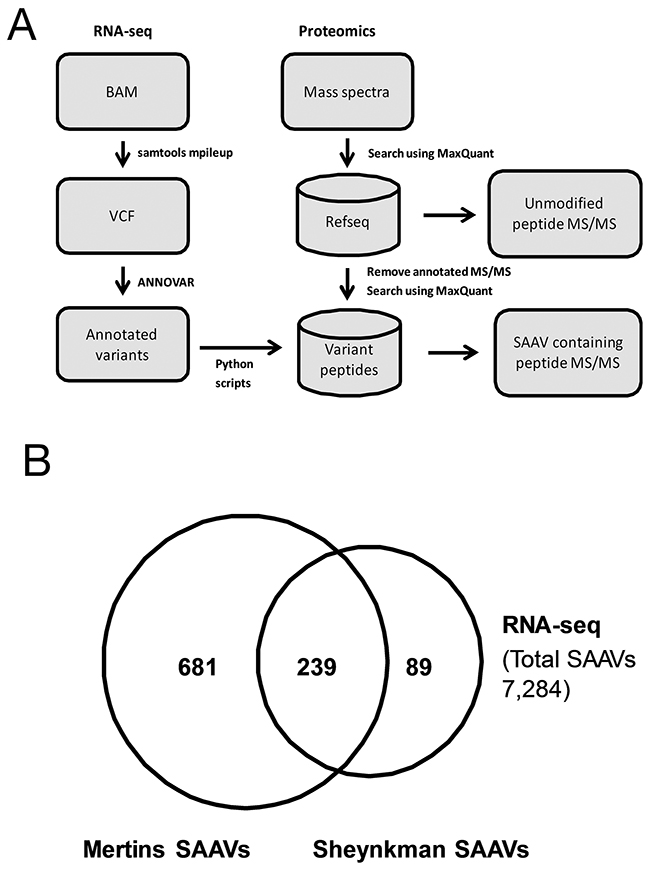 Analysis of RNA-seq variants in proteomics datasets.