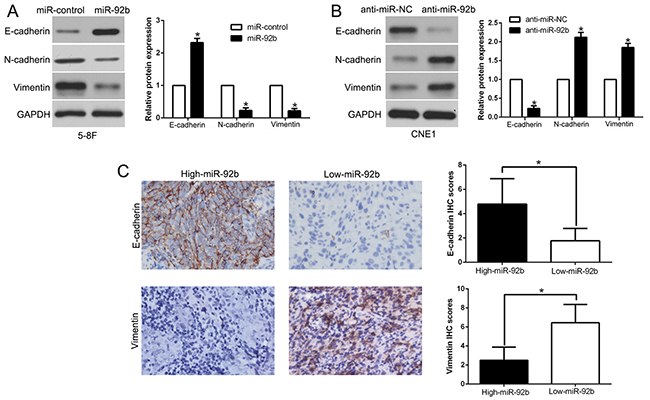 miR-92b suppresses epithelial-to-mesenchymal transition in NPC cell.