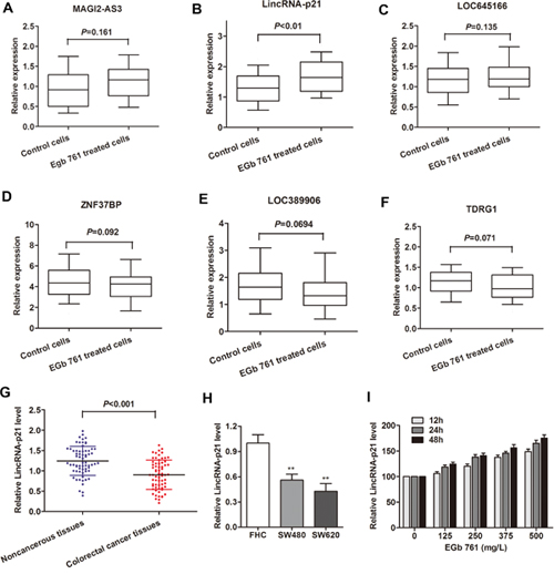 LincRNA-p21 was induced by EGb 761 treatment in colorectal cancer cells.