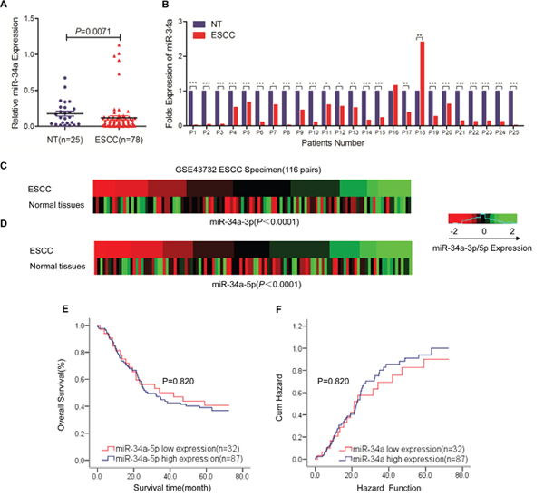 MiR-34a is aberrantly downregulated in ESCC tissues and is correlated with disease progression.