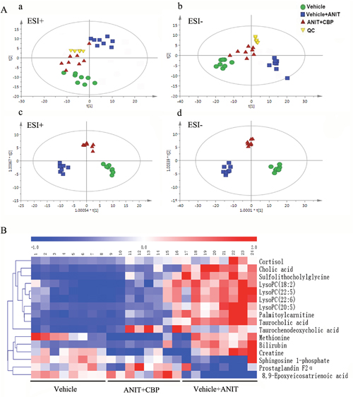 Metabolomics study of CBP in mice with intrahepatic cholestasis.