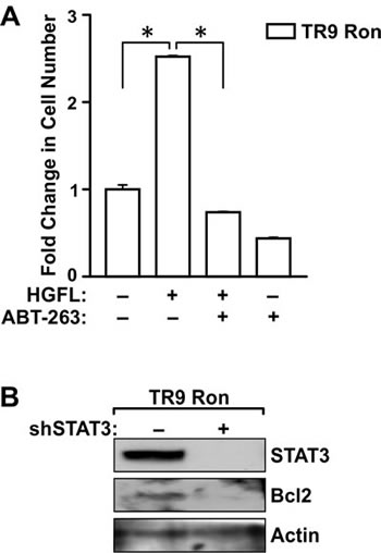 Bcl2 and STAT3 are required for HGFL-induced prostate cancer cell survival.