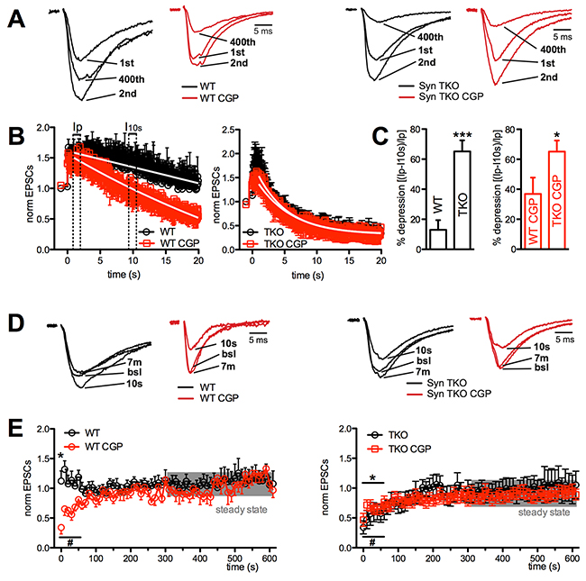 GABABR blockade greatly increased depression at Schaffer collaterals/CA1 pyramidal neuron synapses of WT, but not TKO, hippocampal slices.