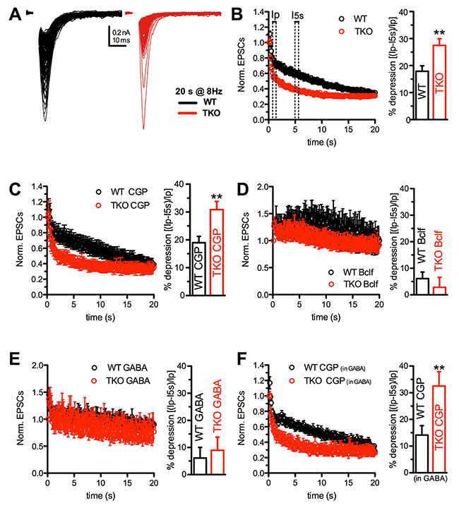 The enhancement of synaptic depression in TKO autaptic neurons is suppressed by GABABR activation.