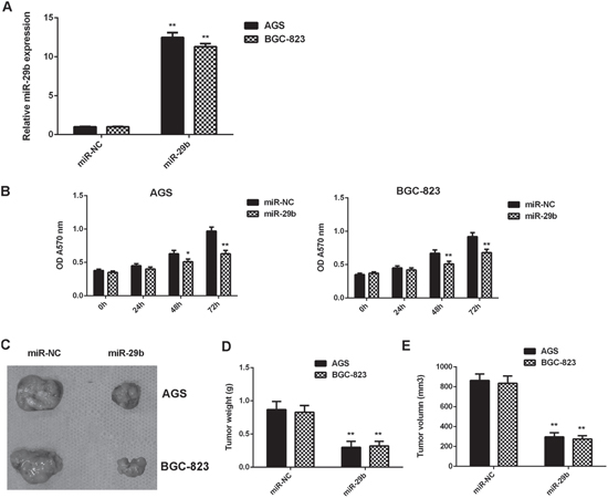 Overexpression of miR-29b inhibits gastric cancer cell growth in vitro and in vivo.