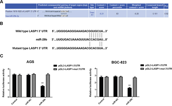 LASP1 is a target gene of miR-29b in gastric cancer cells.