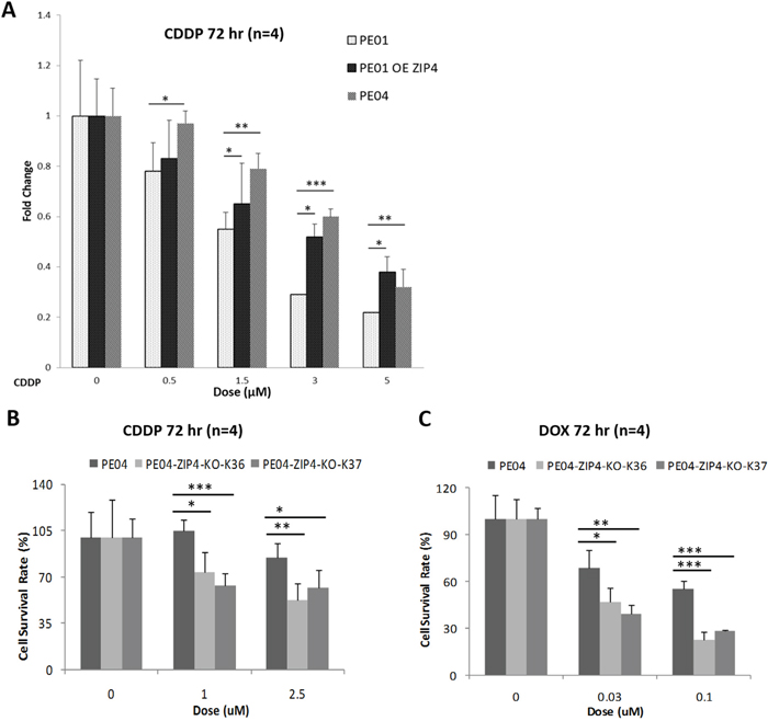 ZIP4 was involved in drug-resistance in HGSOC cells.