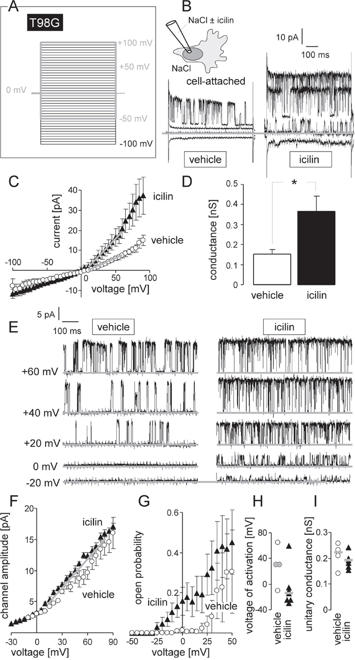 TRPM8 agonist icilin stimulates BK K+ channel activity in human glioblastoma cells at physiological membrane potential.
