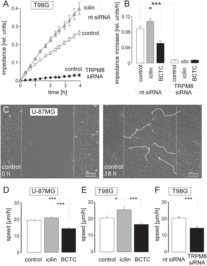 TRPM8 function is required for migration of human glioblastoma cells.
