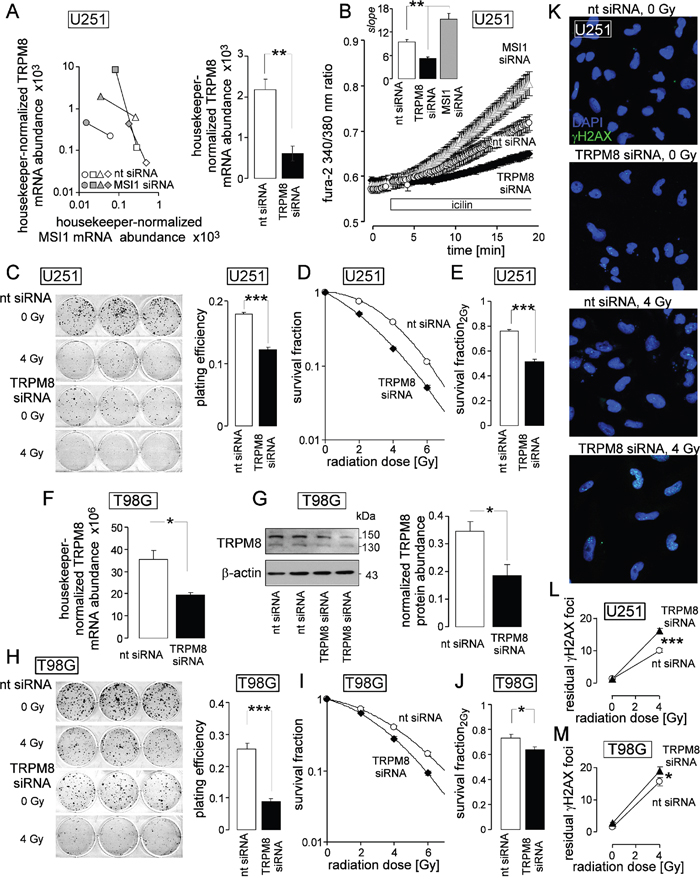 TRPM8 generates Ca2+ entry, increases clonogenic survival, and confers radioresistance to human glioblastoma cells.