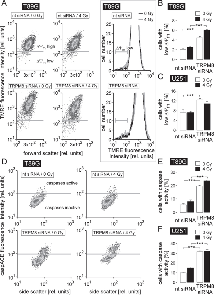 TRPM8 silencing induces breakdown of inner mitochondrial membrane potential (ΔΨm) and caspase activation in human glioblastoma cells.