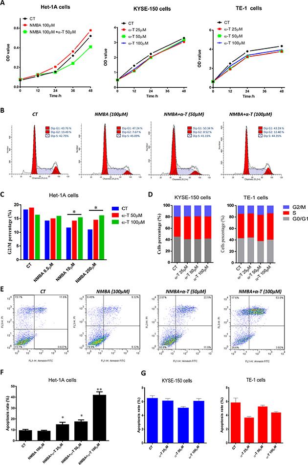 α-Tocopherol induced cell cycle G2 arrest and apoptosis in NMBA-treated normal esophageal epithelial cells but was not effective in ESCC cell lines.
