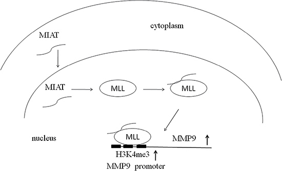 Hypothesis of the mechanism of MIAT on NSCLC.