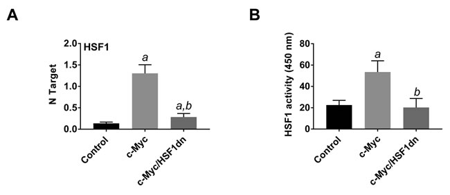 HSF1 is overexpressed and strongly activated in c-Myc mice.