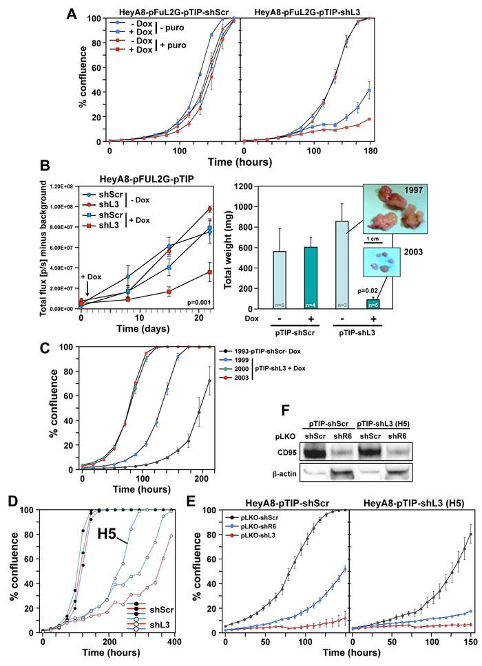 HeyA8 cells regress