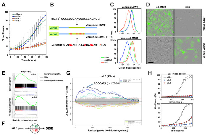 CD95L derived siL2 and siL3 knockdown CD95L and induce DISE by targeting critical survival genes.