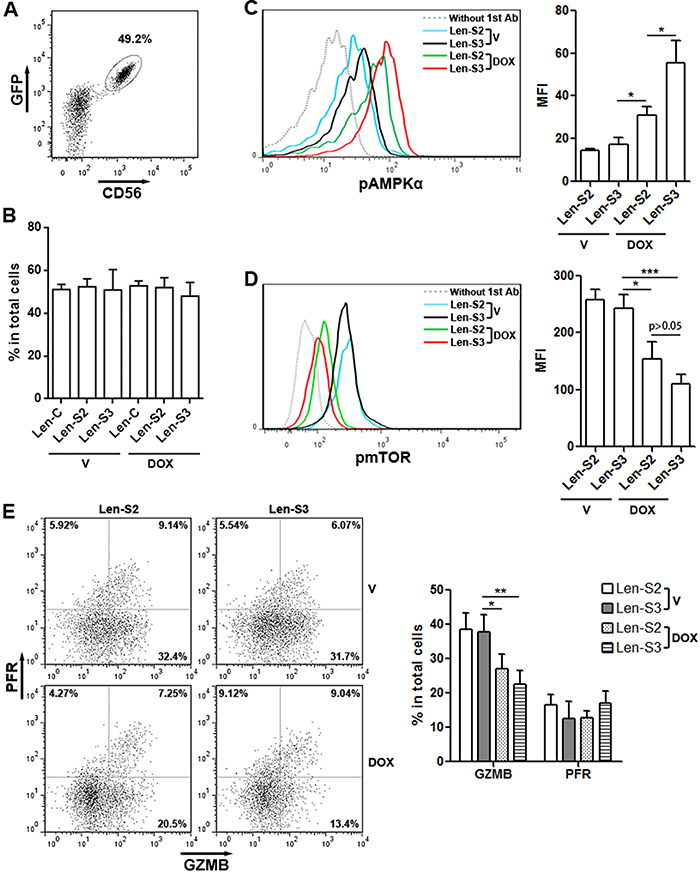 SESN2 and SESN3 inhibit NK-92 cell activity in vivo.