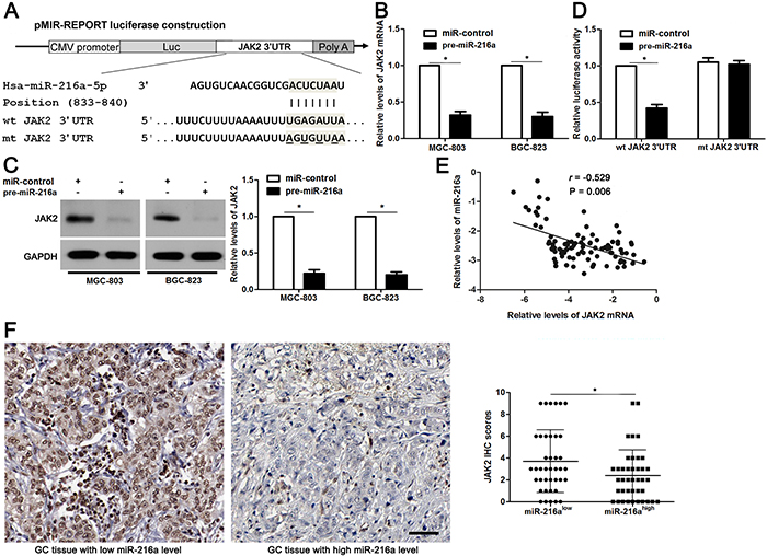 JAK2 is a direct target of miR-216a in GC cells.