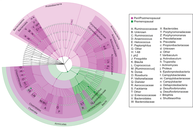 Cladogram of differentially abundant taxa in peri/postmenopausal and premenopausal patient urine.