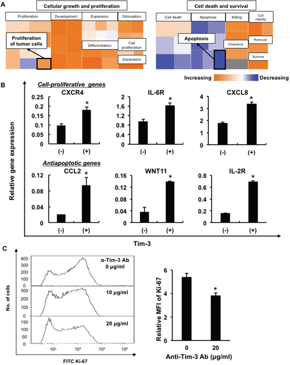 Upregulation of cell proliferation-related and antiapoptotic genes in Tim-3+ MDS cells.