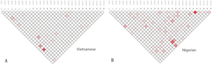 Linkage disequilibrium patterns in the Vietnamese and Nigerian populations.