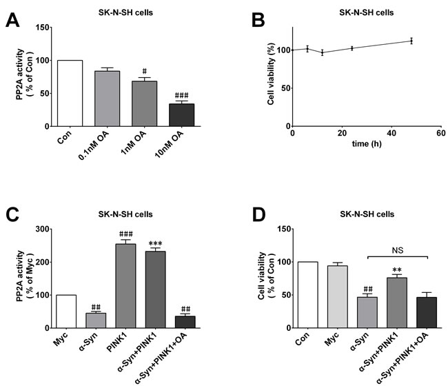 PINK1 abolishes the protective effects against α-Syn-induced cell injury in PP2A inactive condition.