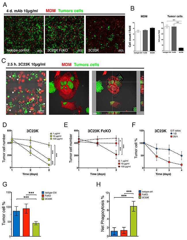 3C23K eliminates ovarian tumors cells by directing TAM to induce ADCC and ADCP in vitro and ex vivo.