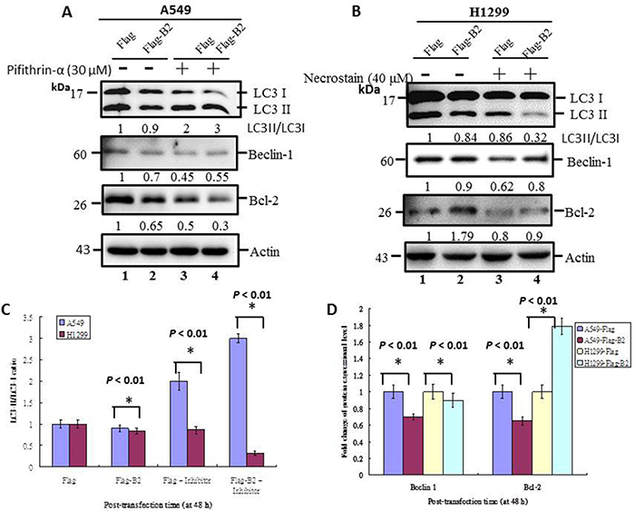 Crosstalk of apoptosis and necroptosis pathways limits initiation of autophagy in human lung cancer cells.