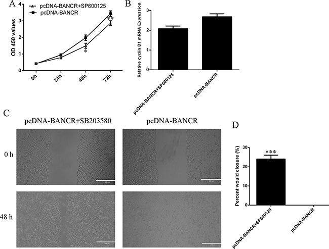 BANCR promoted VSMCs proliferation and migration via regulating JNK.