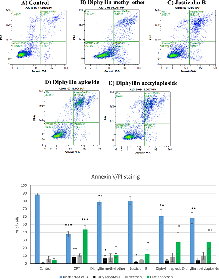 Flow cytometry analysis of human melanoma A375 cells stained with Annexin V-FITC/PI after exposure to GI50 concentrations of Diphyllin derivatives during 24h.