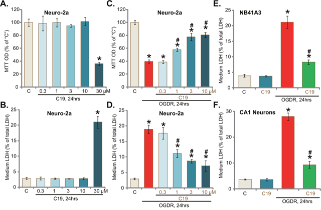 C19 protects neuronal cells from OGD/re-oxygenation.