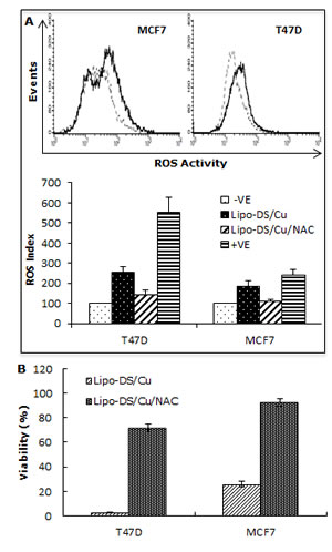Lipo-DS/Cu induces ROS-MAPK and inhibits NFκB pathways and specifically targets BC cells.